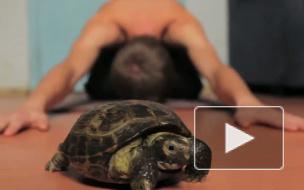 Ты как черепаха!