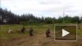 """Новости Украины: отложена реализация проекта """"Стена"""" ..."""