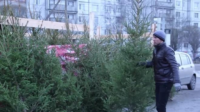 Дыхание Петербурга: любопытные события предновогодней недели