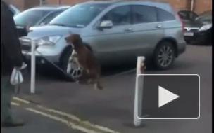 Собака-акробат стала хитом Youtube, несмотря на то, что ролик удалили