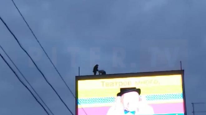 Опасно для жизни: в центре Петербурга школьники-руферы забрались на баннер на крыше