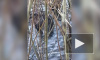 Удивительное видео из Казани: на озере Харовое появились бобры