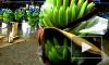 Россельхознадзор может запретить ввоз бананов из Эквадора