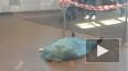 """На станции метро """"Гражданский проспект"""" умерла женщина, ..."""