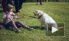 Кошки и собаки Петербурга устроили пушистую феерию в Муринском парке
