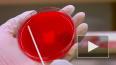 Число инфицированных ВИЧ в России превысило 1 млн ...