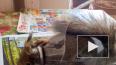 Фото: в Царском Селе напуганная белочка застряла в корму...