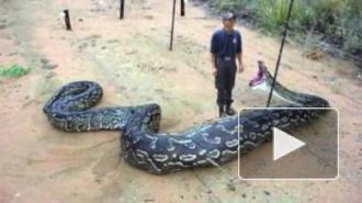 дети и огромные змеи, ужас!