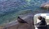 В Петербурге и Ленобласти с начала года нашли 50 мертвых тюленей и нерп