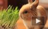 В Петропавловской крепости детям покажут, как кролики любят друг друга