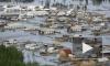 Наводнение в Алтайском крае, последние новости: масштабы разрушений огромны