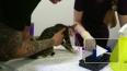 Видео: в Каменке спасатели вытащили котенка из вентиляци...