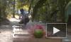Занимательное видео из США: американец испытал гигантскую мышеловку-убийцу