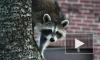 Трех замученных енотов и еще одну сову вырвали из рук бездушных фотографов в центре Петербурга