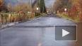 Удивительное видео: Лосось перешёл через дорогу в ...