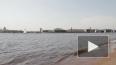 Все водоемы Санкт-Петербурга кишат паразитами и вирусами ...