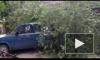 Шторм в Шлиссельбурге повалил на автомобиль дерево