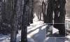 Выборгские деревья находятся под постоянным наблюдением