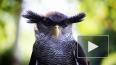 Двух сов отобрали у бездушных фотографов около Исаакиевс ...