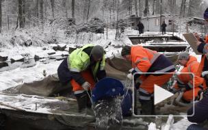 В реку Вуоксу выпустили молодую особь сига