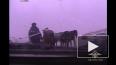 В Красноярске автополицейские спасли лошадей от гибели ...