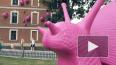 Видео: гигантские розовые улитки атаковали Новую Голланд...