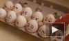 Политиков атакуют капуста, яйца и даже венки
