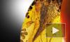 В куске янтаря обнаружили череп самого маленького динозавра в истории