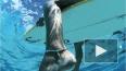 У берегов Австралии белая акула разорвала напополам ...