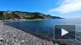 На берег Геленджика выбросило мертвых дельфинов