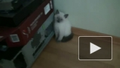 Новый кот