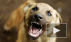 В Ногинске бродячая собака искусала лицо 4-летней девочки на глазах у отца
