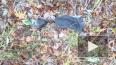 На Камчатке обнаружены одежда и останки 5-летнего ...