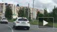 Голубь прокатился с ветерком по улицам Сургута на ...