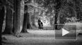 Мать подкидыша из Пулковского парка ищут в полицейских ...