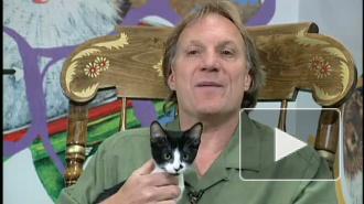 Кошачье безумие или как пристроить животное