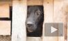 Жители Дятлово жалуются на собачий приют напротив жилых домов: администрация предложила компромисс