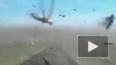 Жуткие кадры из Дагестана: Очевидец снял полчища саранчи