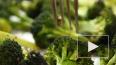 В Минздраве РФ сообщили, как правильно питаться осенью