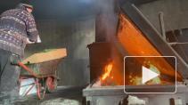 В Ленобласти сожгли 240 зараженных хризантем