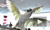 Чемпионат мира-2014, Россия - Алжир: попугай-пророк сделал прогноз