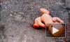 В убийстве ребенка под Рождество подозревают мигранта в тапках