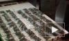 У молодого петербуржца нашли более 400 граммов кокаина, гашиша и МДМА