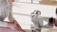 Sony представила новое поколение электронной собаки Aibo