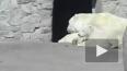 Петербургский зоопарк ищет имя для трогательного белого ...