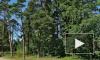 Задержан предполагаемый убийца девушки в лесопарке на Приморском шоссе в Петербурге