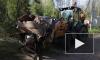 Субботники продолжаются: на Дальней улице убрали несанкционированную свалку