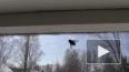 В Петербурге весенняя муха со сна покусала клерка