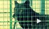 Канадский волк из Купчино нашел себе товарища