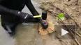 На Филиппинах обнаружено поедающее камни существо